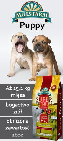 (M) mills farm puppy