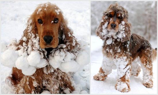 wypadanie sierści u psa w zimie