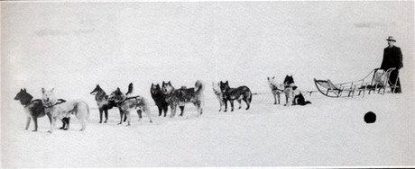 [Obrazek: 1908_first_sled_dogs.JPG]